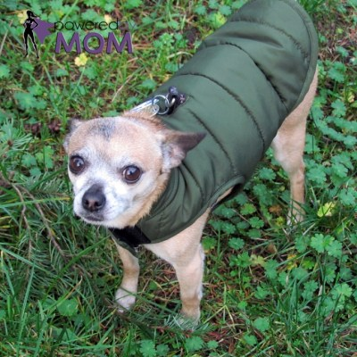 Warm & Cozy Dogs with North Fetch Dog Jackets #NorthFetch
