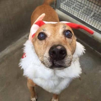 Adopt a Dog- Meet Rusty