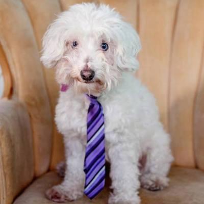 Adopt a Dog- Meet Toby Sinatra
