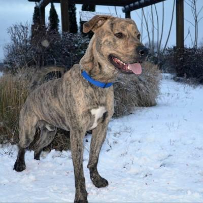 Adopt a Dog- Meet Rocco