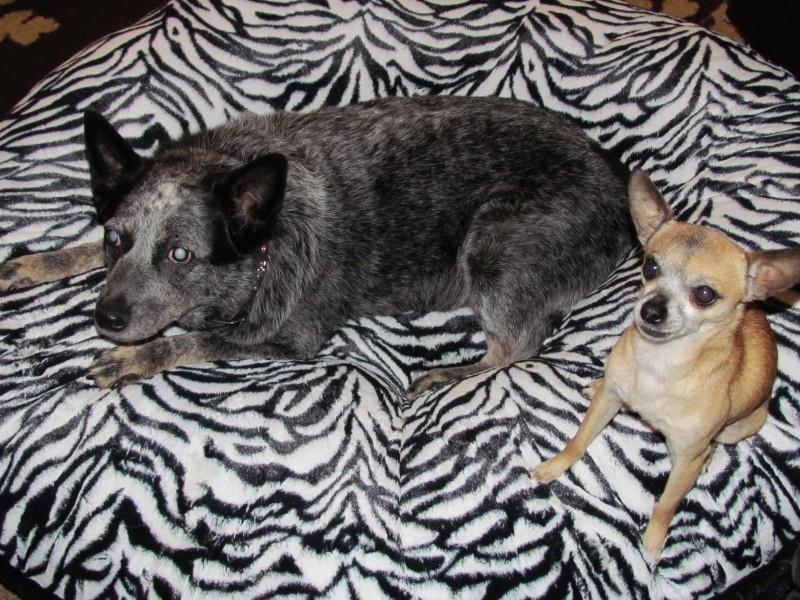 pet friendly carpet deodorizers