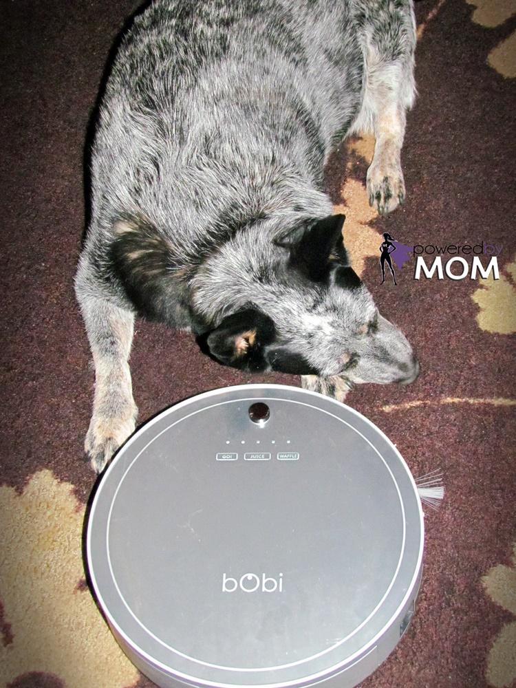 bObi pet and Luna