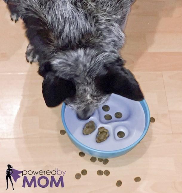 Luna eating PBM