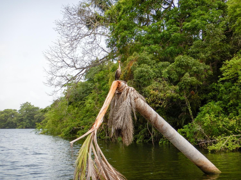 Belize river boat