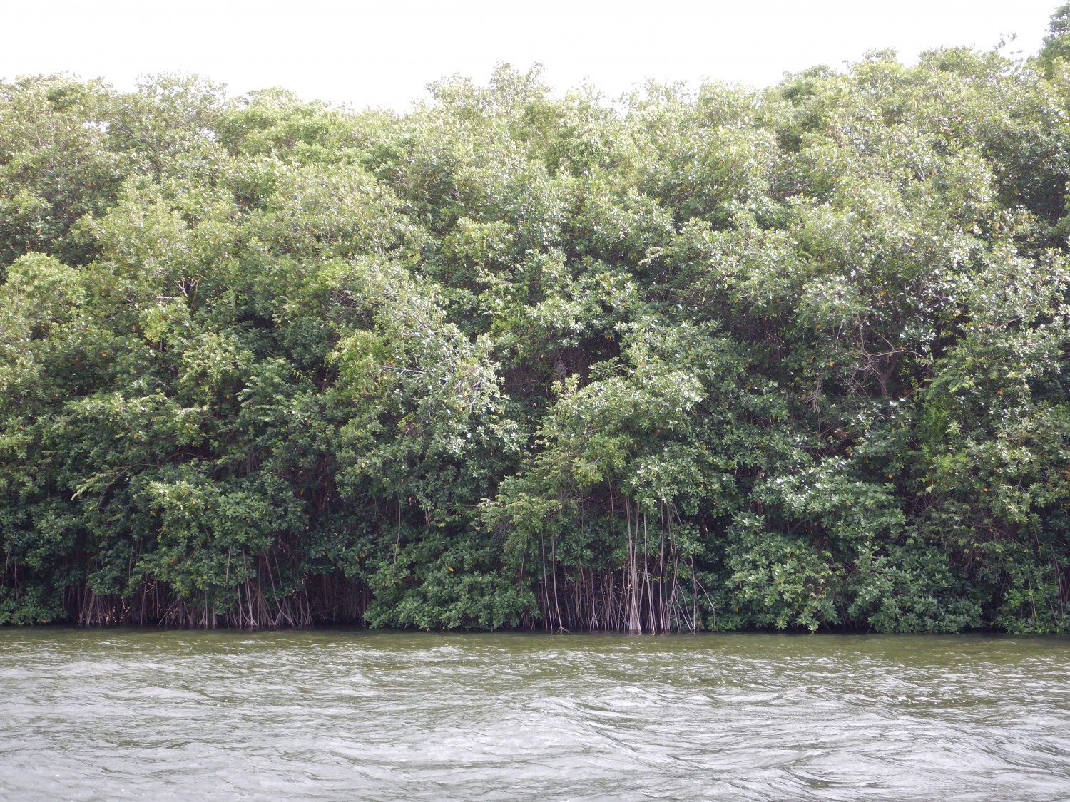 Belize river boat tour (6)
