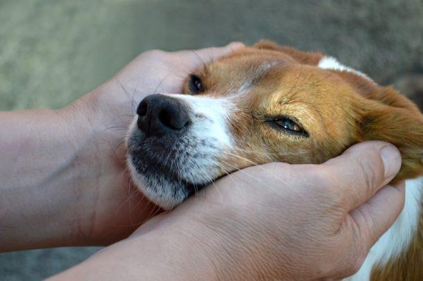 Adopting a pet