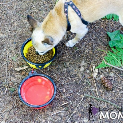 Mr. Peanuts Collapsible Dog Bowls