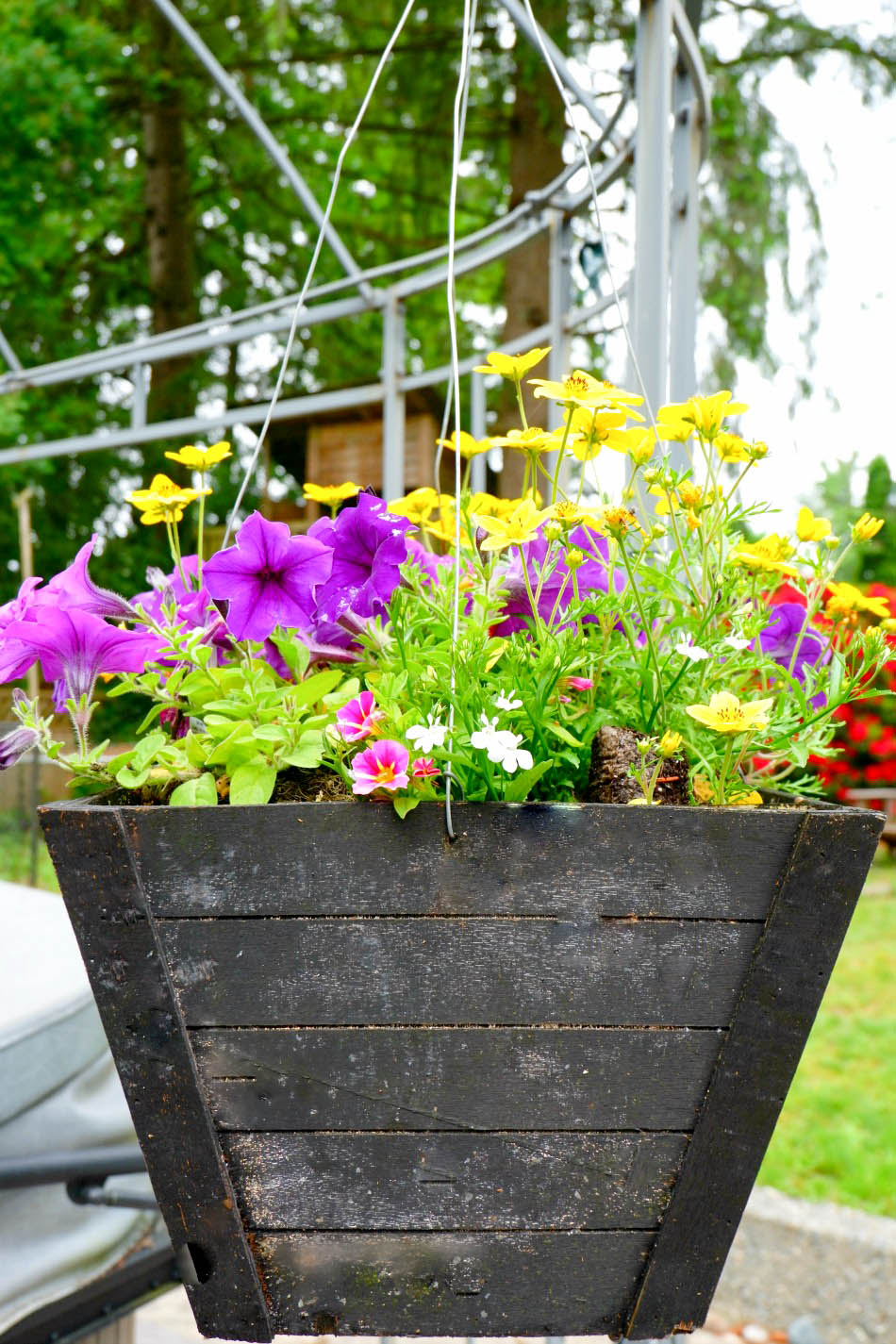 backyard hanging basket