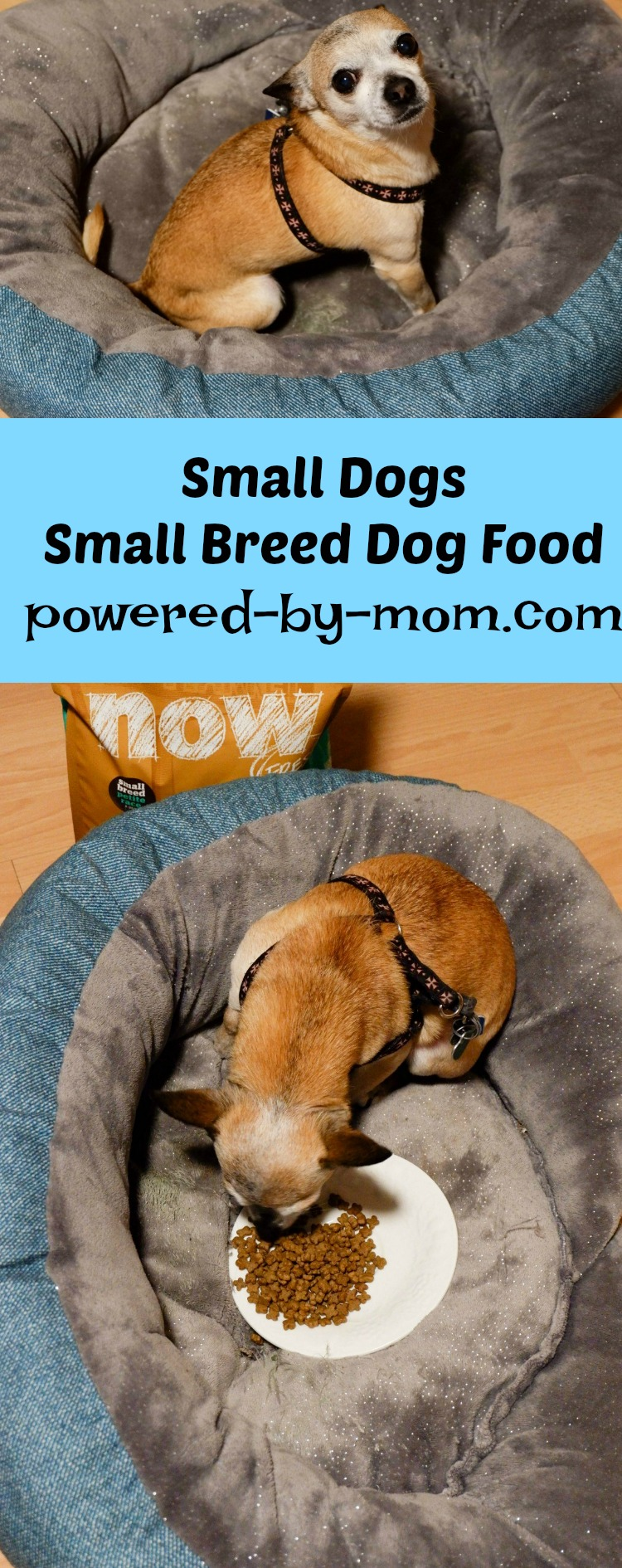 why small dogs need small breed dog food