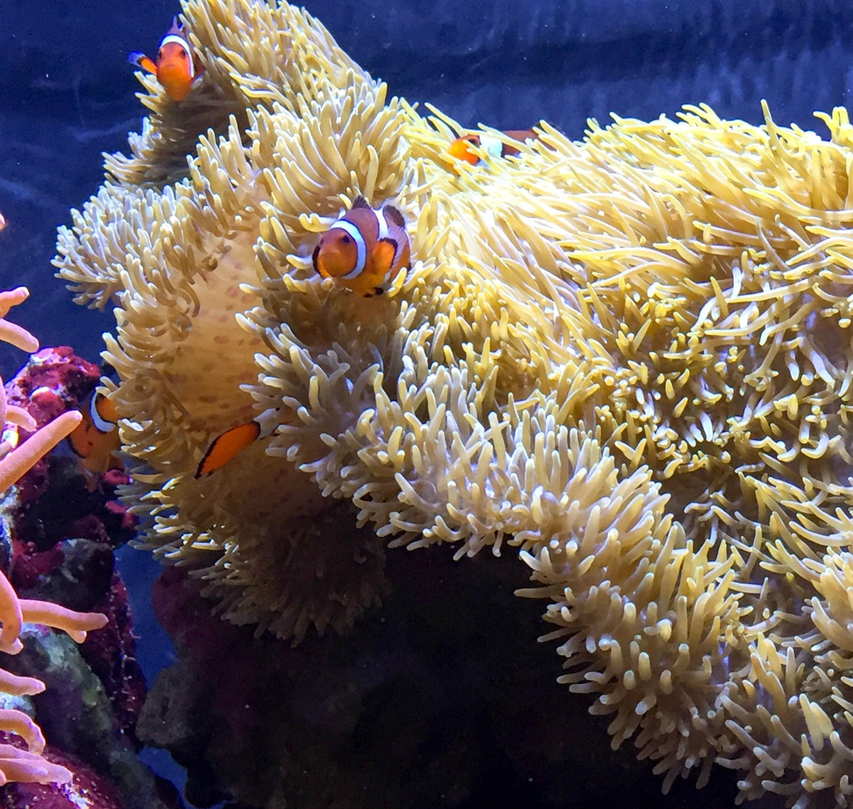 Seattle Aquarium top things to do in Washington state