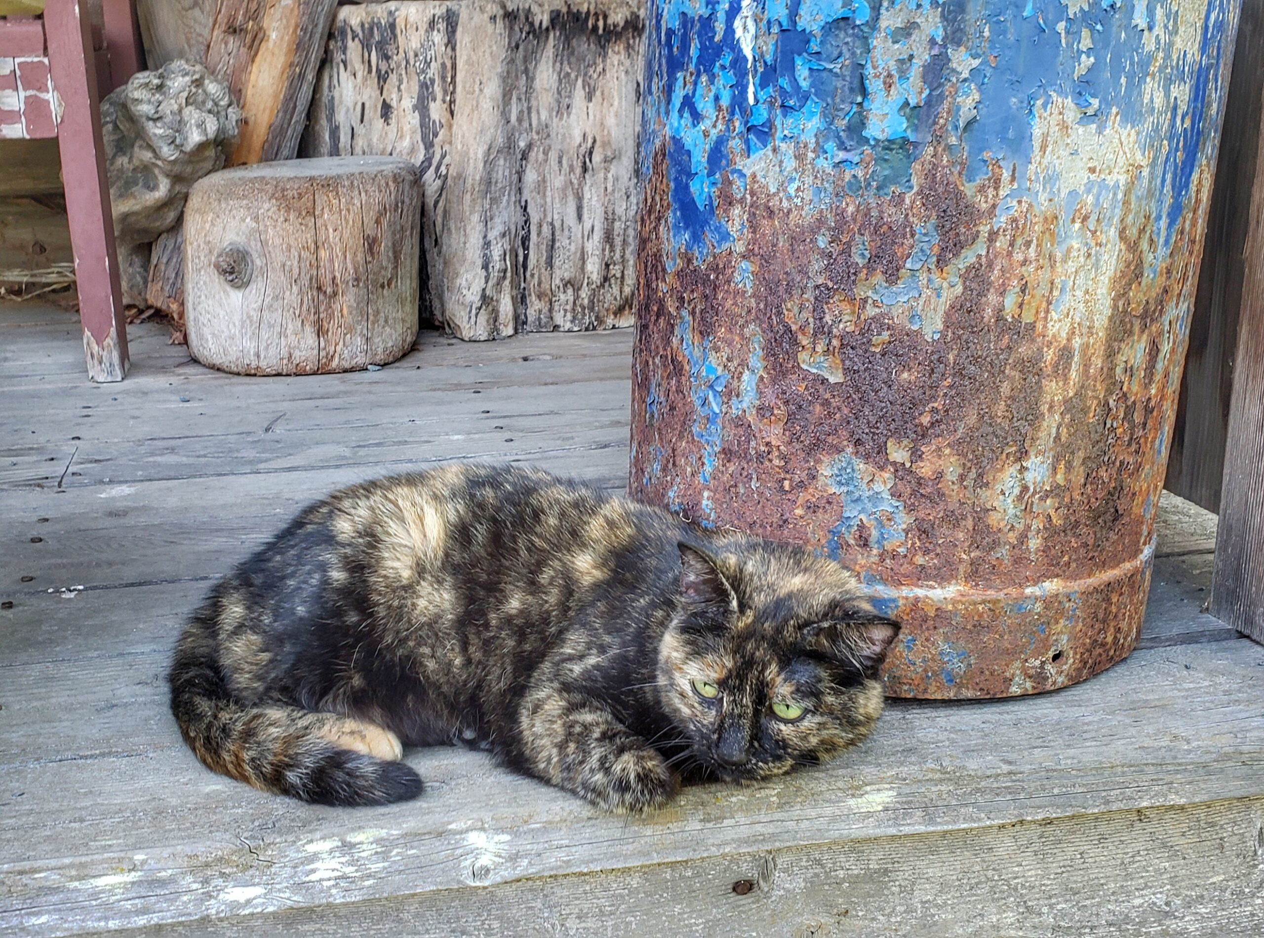 resident cat at Kilby Historic Site