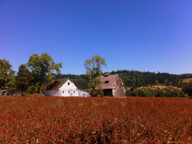 field and barn Oregon wine country biking