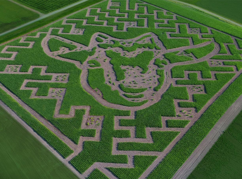 Topaz farm corn maze
