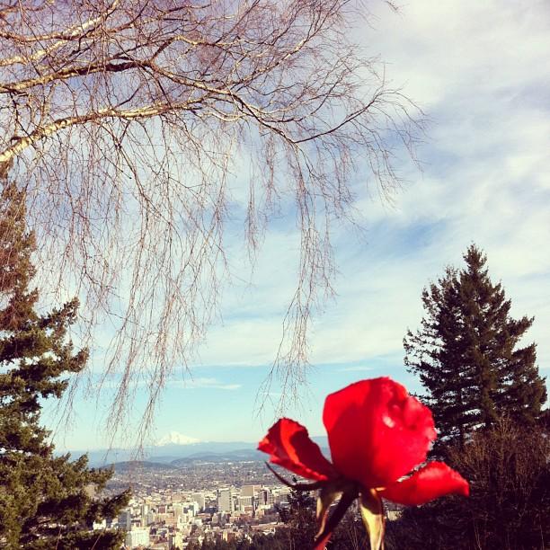 Portland in February