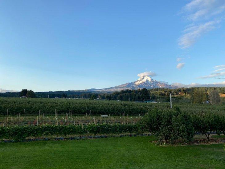 Kiyokawa family orchards - apple orchard with Mt Hood View