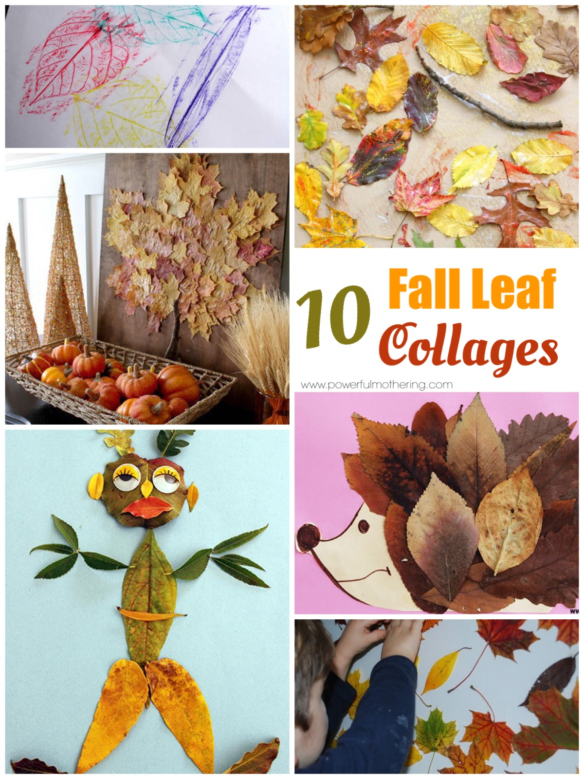 top 10 leaf collages