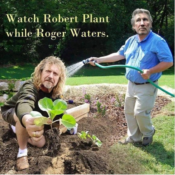 Plant Waters copy