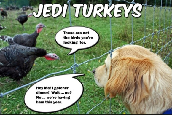 Jedi Turkeys copy