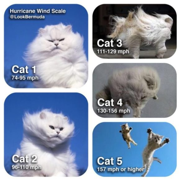 cat-scale-copy