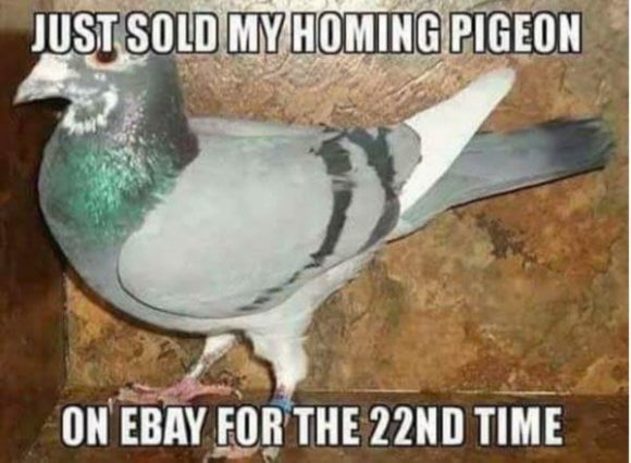 Homing Pidgeon