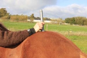 Hest behandles med laser på lænden