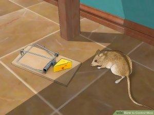 شركة مكافحة الفئران ابوظبي