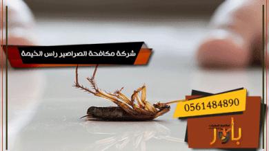 شركة مكافحة الصراصير راس الخيمة