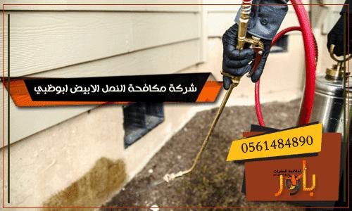 شركة مكافحة النمل الابيض ابوظبي