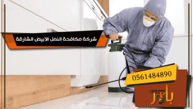 شركة مكافحة النمل الابيض الشارقة
