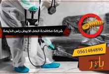شركة مكافحة النمل الابيض راس الخيمة