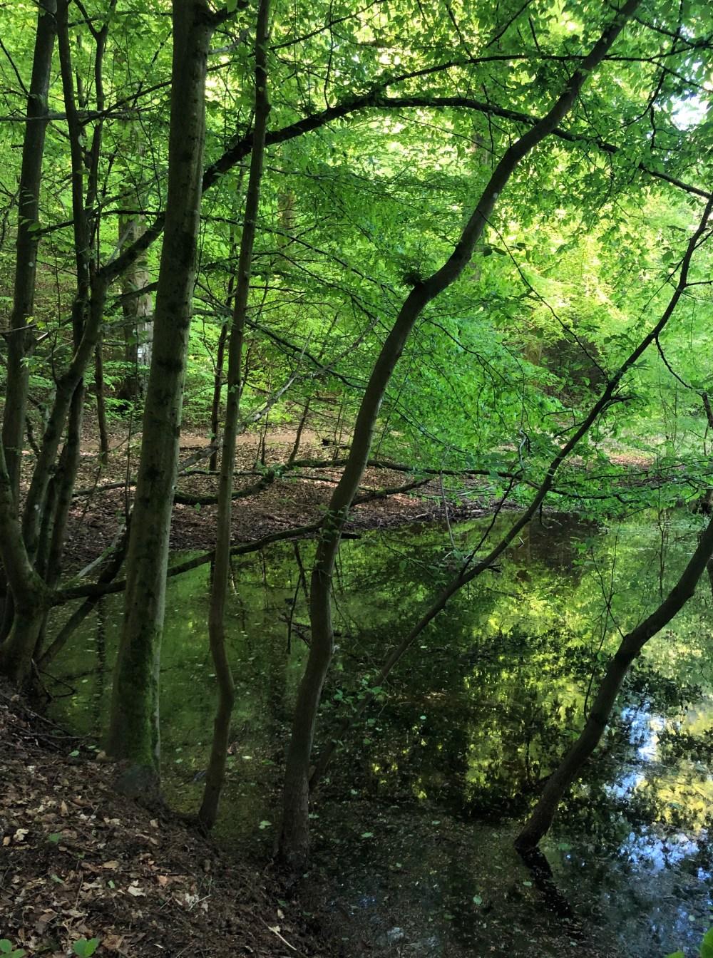Grün strahlender Teich hinter dem Kirkeler Bach