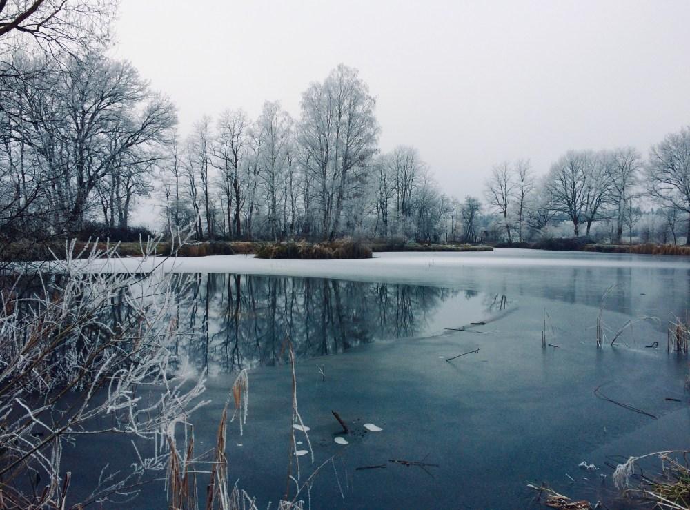 Gefrorener Weiher im Winter auf dessen Fläche sich die neben stehenden Bäume spiegeln