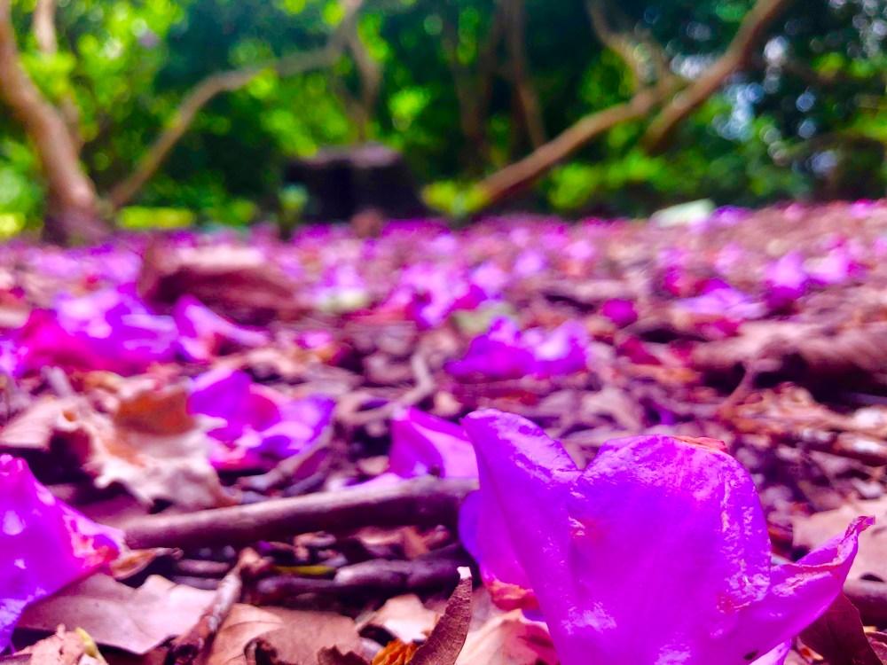 Pinkfarbene Blumen auf dem Boden