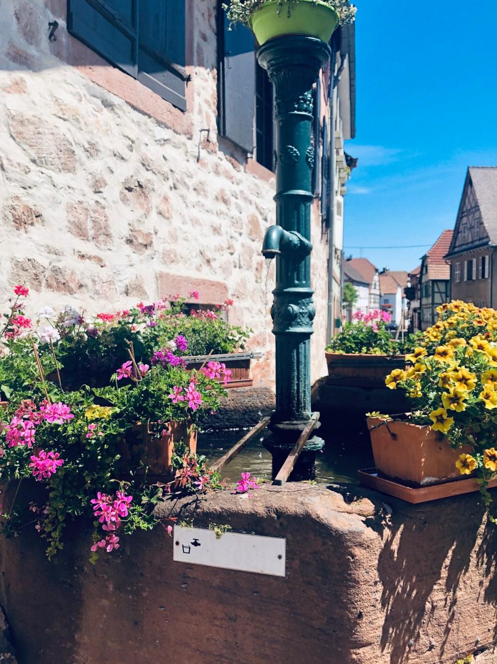 Wasserbecken mit Blumentöpfen und Fachwerkhäuser im Hindergrund