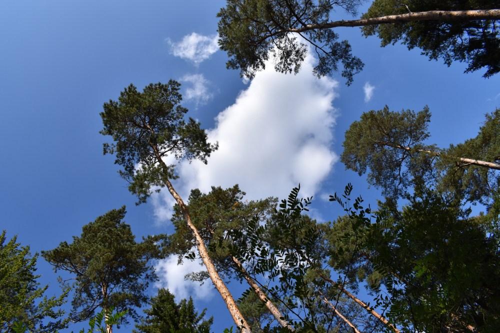 Große Bäume unter blauem Himmel