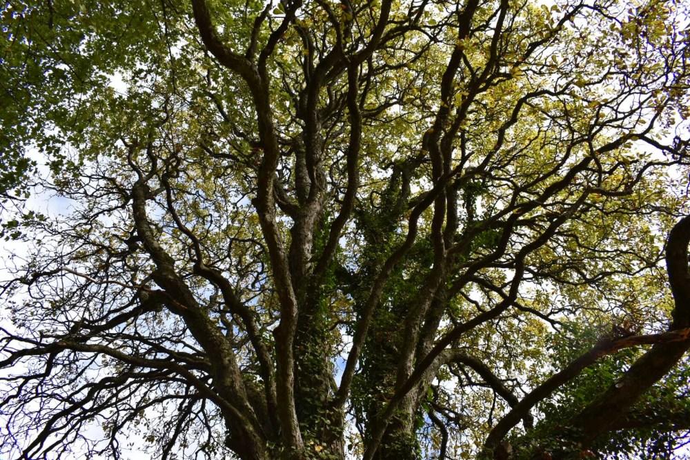 Großer verzweigter Baum