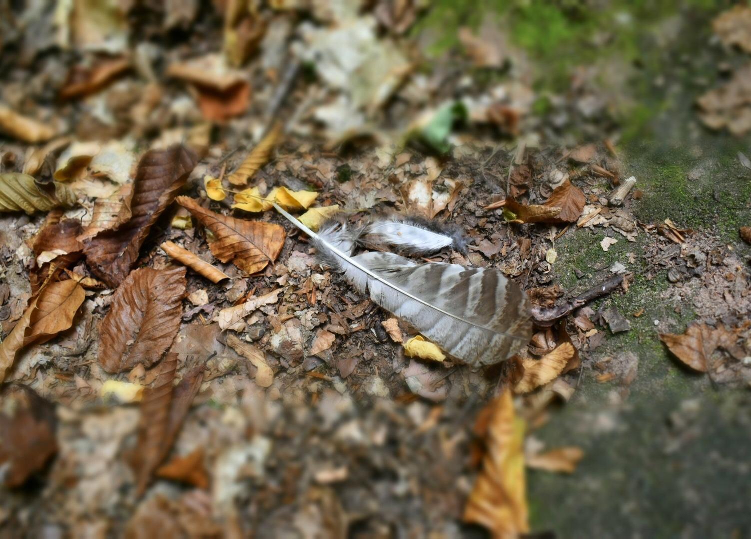 Vogelfeder umgeben von Blättern
