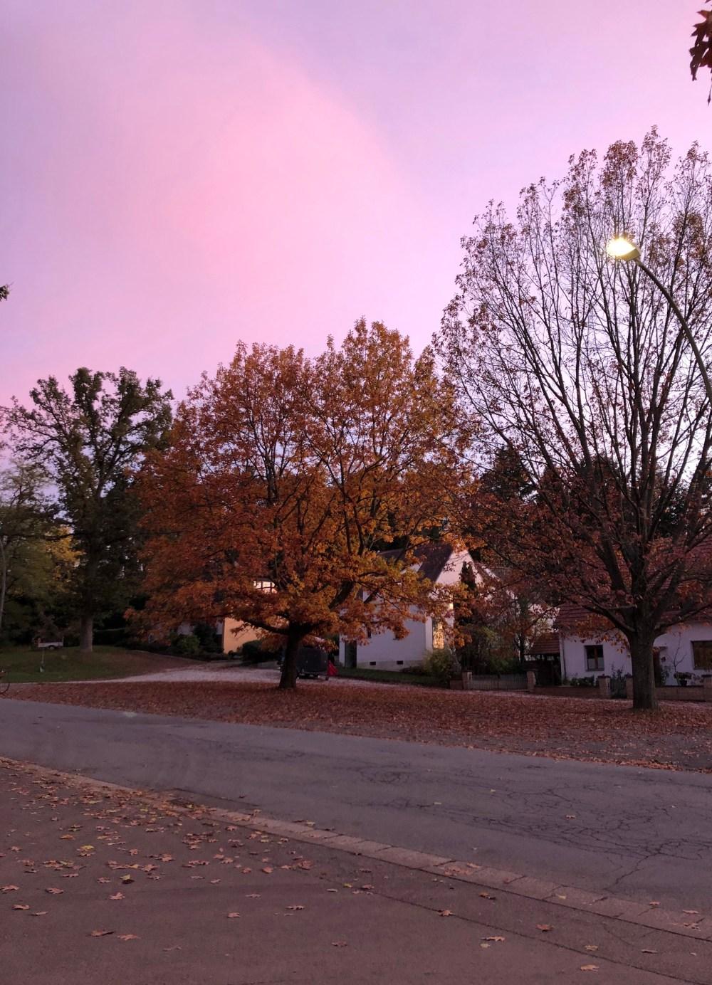 Bäume unter rosigen Wolken
