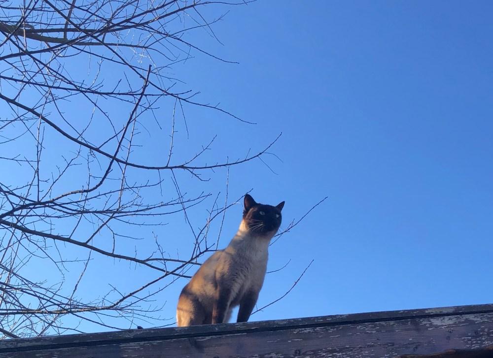 Katze unter kräftig blauem Himmel