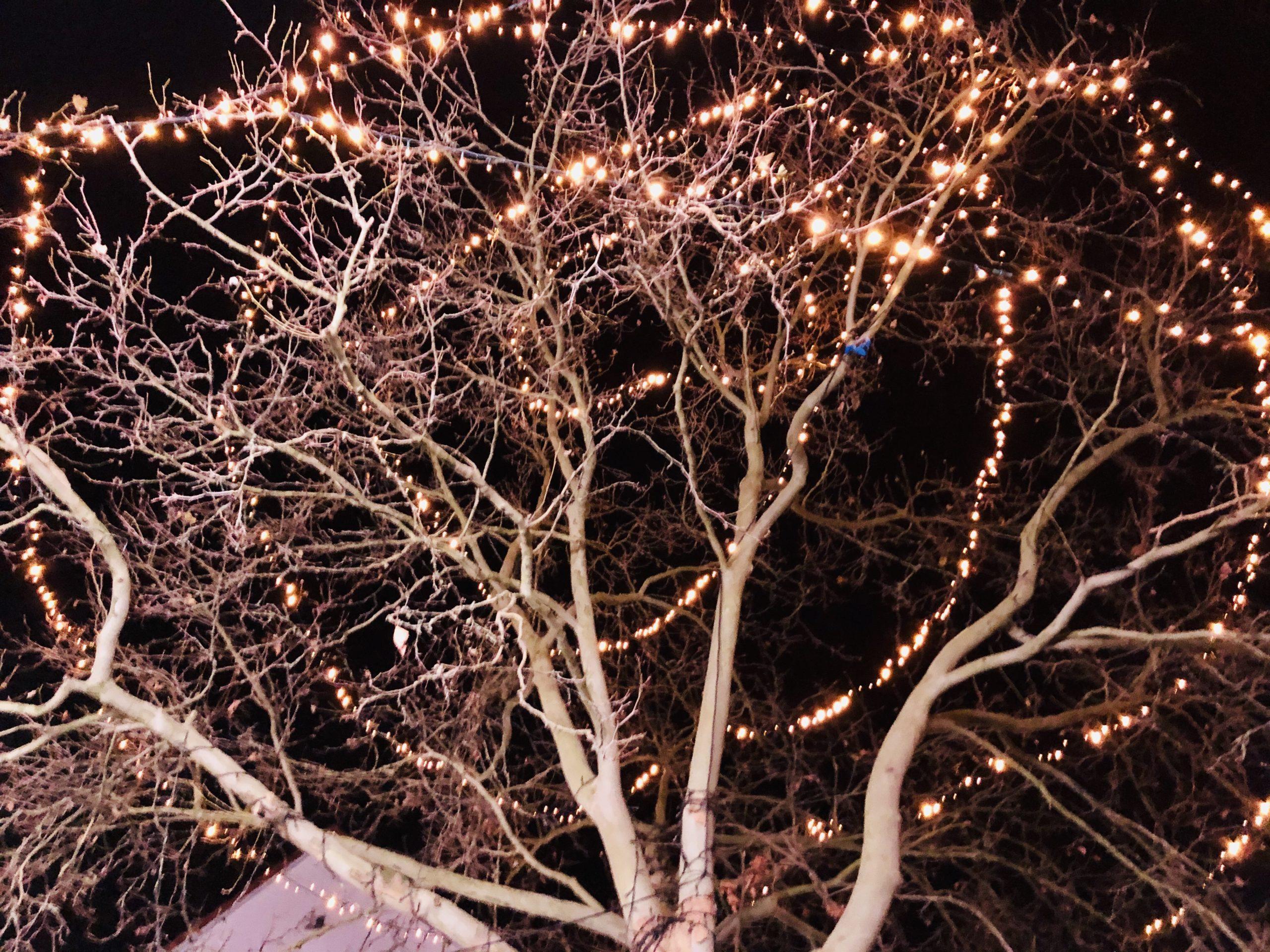 Mit einer Lichterkette geschmückter Baum
