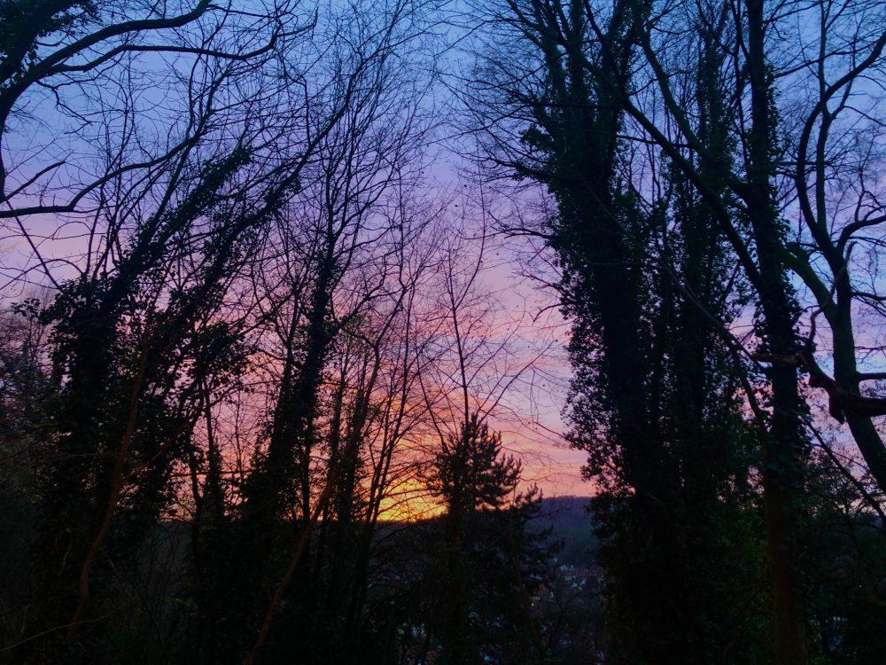 Bäume Büsche vor der aufgehenden Sonne