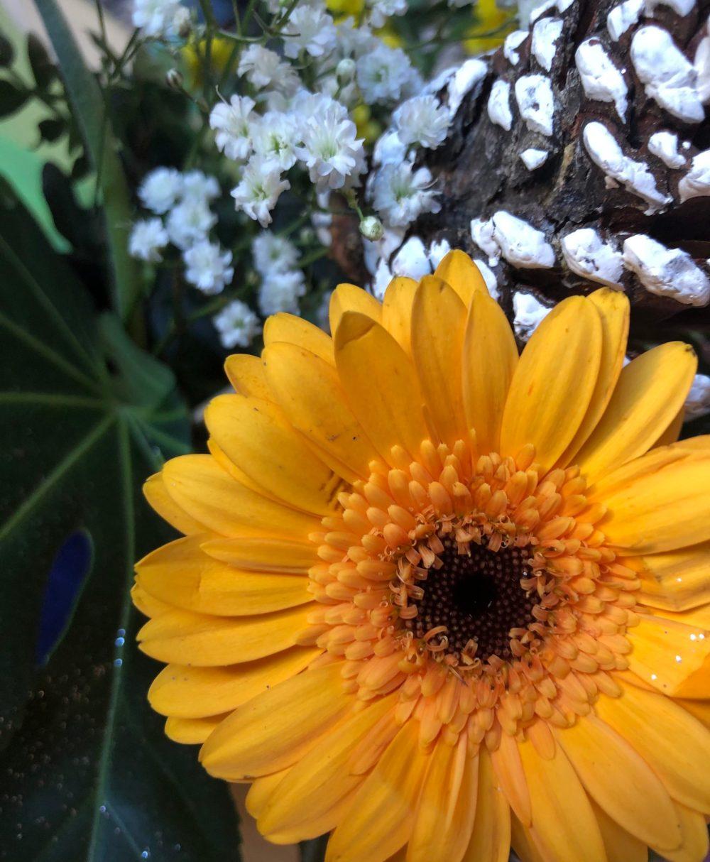 Blume mit gelben Blättern vor einer Eichel und anderen Pflanzen