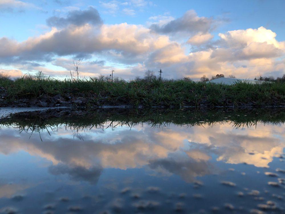 Wolken, die sich auf einer Pfütze vor der Wiese spiegeln