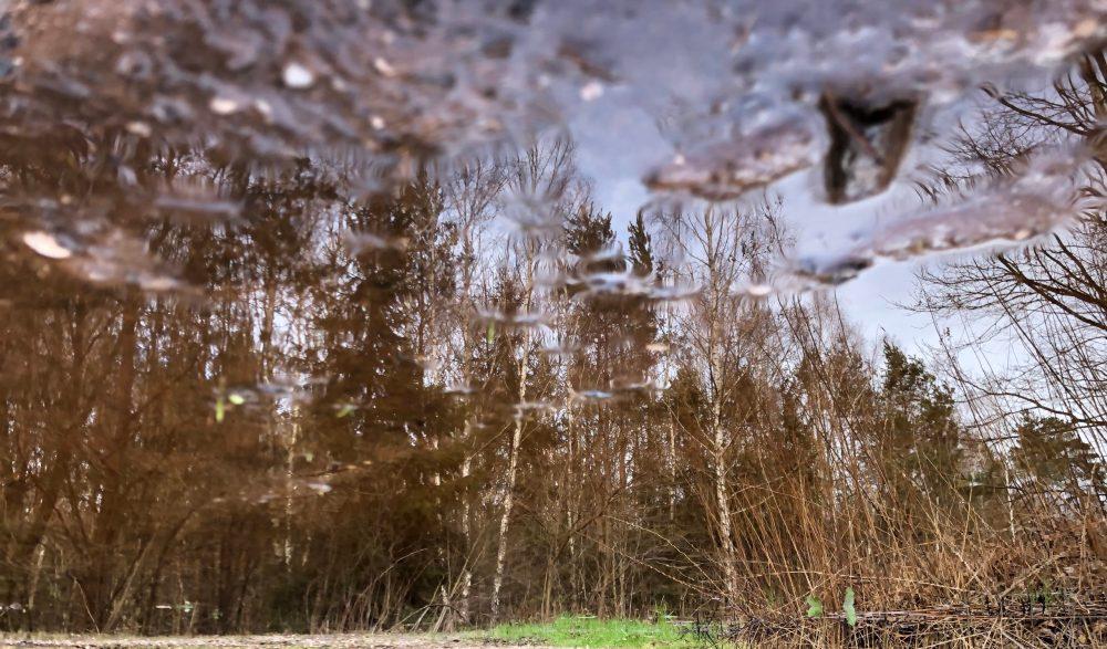 Spiegelung des Waldes in einer Pfütze