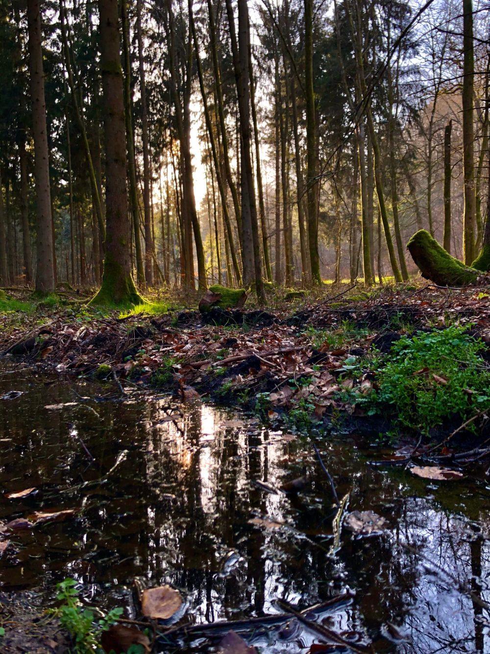 Fluss im Wald, vor Bäumen durch die die Sonne strahlt