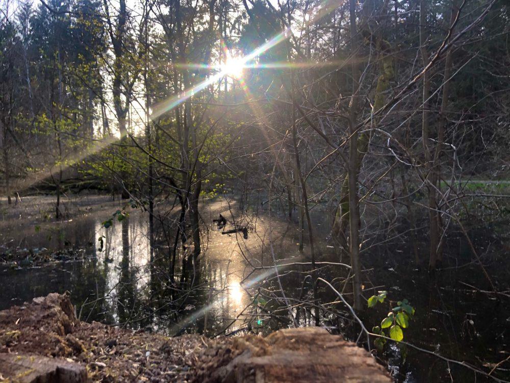Sonnen Reflexion auf einem Überschwemmten Gebiet im Kirkeler Wald
