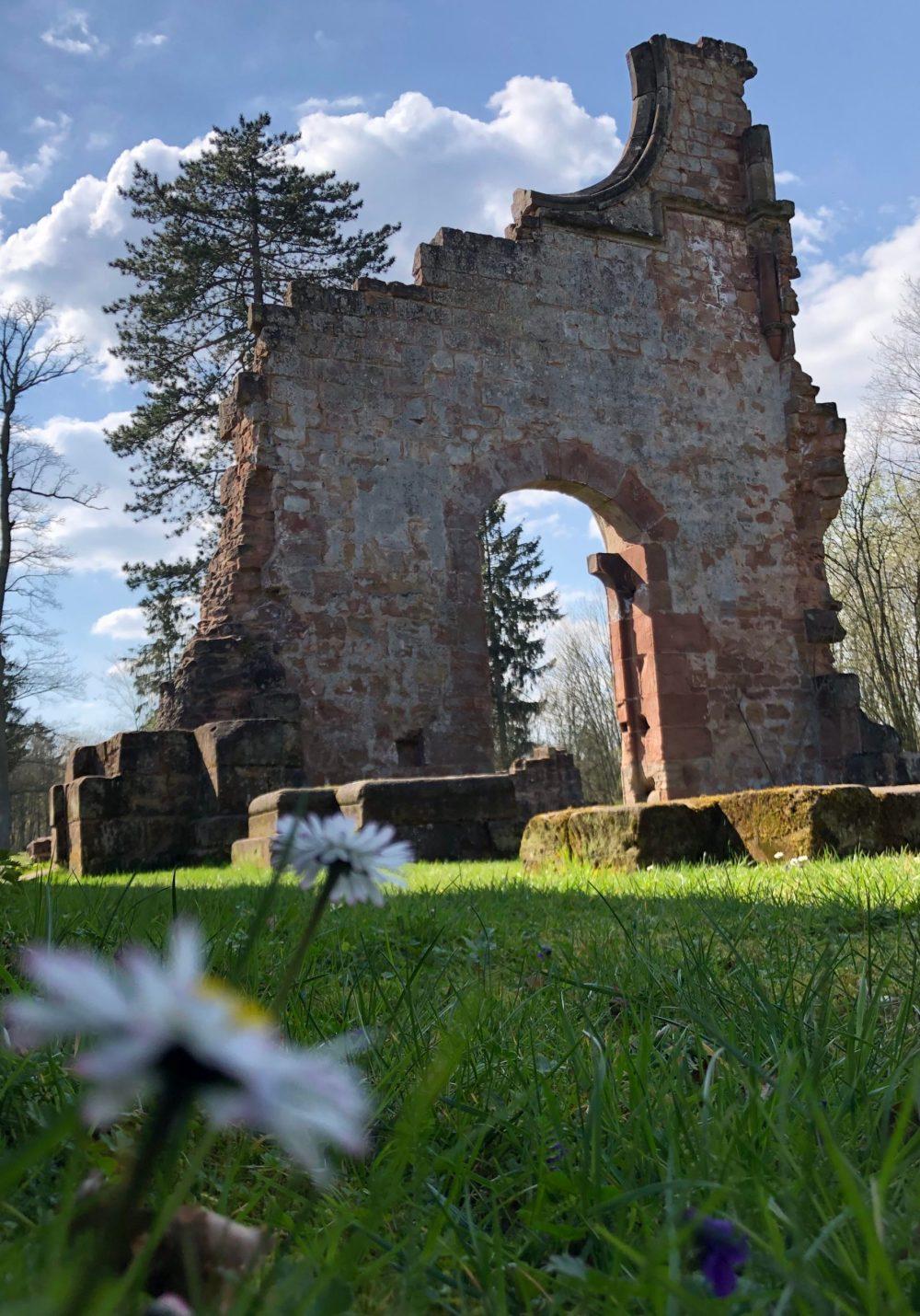 Gänseblümchen in den Ruinen der ehemaligen Kirche des Klosters