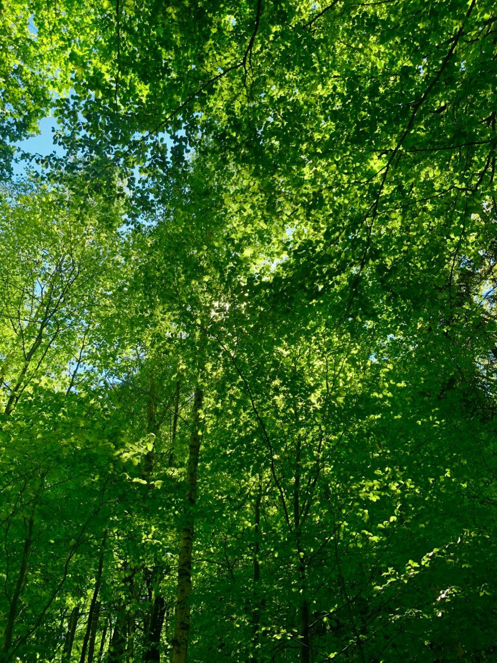 Grüne Atmosphäre im Wald
