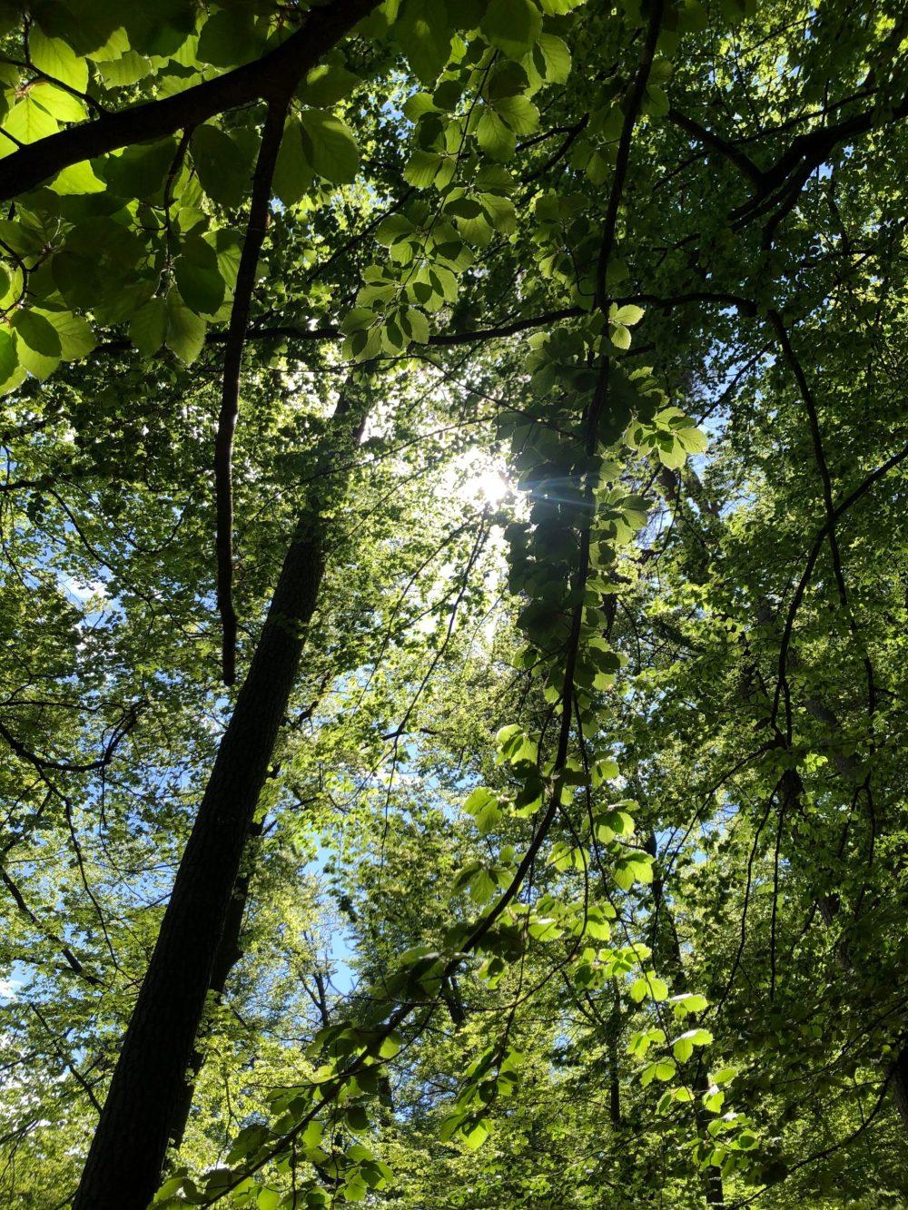Blick durch die Laubbäume in die Sonne