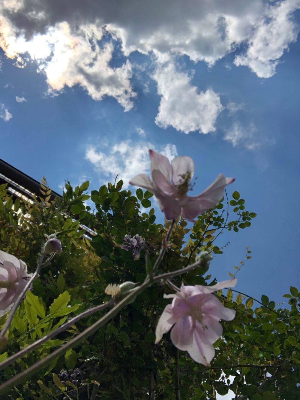 Glockenblumen von unten, unter dem Himmel